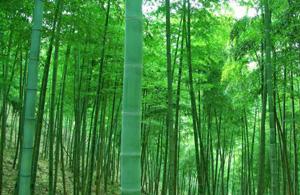 竹博园旅游