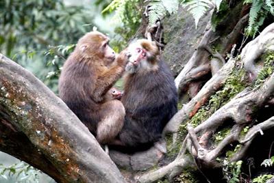贡布日山和猴子洞