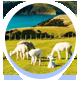 暑假新西兰旅游